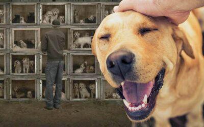 Reino Unido prohibirá las exportaciones de animales vivos tras el Brexit