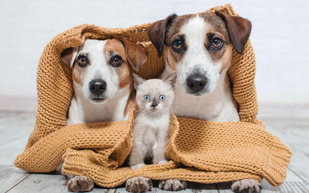 """""""Adoptar una mascota debe ser una decisión meditada"""""""